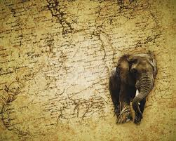 cool elephant wallpaper african elephant wallpaper stock image image of destination 23567075