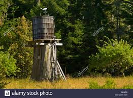 wooden water storage tank on top of large tree stump near albion