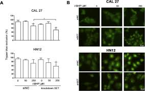 set protein accumulates in hnscc and contributes to cell survival