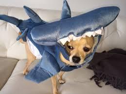 Halloween Pet Costume Halloween Pet Costumes Sharknado U2022 Tamsen Fadal