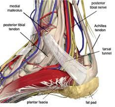 Talar Coalition Tarsal Tunnel Syndrome Foot U0026 Ankle Orthobullets Com