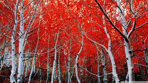Nevada Scenery images Sierra nevada mangroves 50394 autumn theme landscape scenery jpg