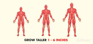 how to grow taller in a week how to grow taller fast and increase height naturally exercises