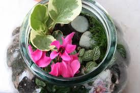 building a terrarium an indoor mobile garden fit for kids