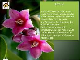 the flower origins