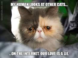 Cat Problems Meme - 15 serious first world problems cats face every day i can has