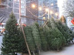 excelent where to buy tree picture