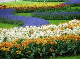 flowers gardens and landscapes photo essay keukenhof the world u0027s largest flower garden