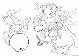 coloriage poires et cerises