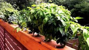 balcony vegetable garden ideas youtube