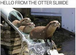 Otter Meme - epic pix â like 9gag â just funny â hello from the otter sliiiiide