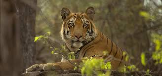 wildlife images The reason why wildlife conservation is important sewee wildlife jpg