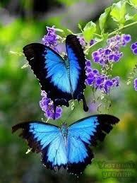 best 25 butterflies ideas on beautiful butterflies
