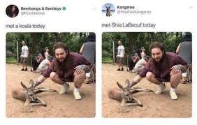 omygosh i realized the guy said koala and not kangaroo and thats