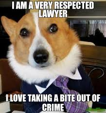 Lawyer Cat Meme - corgi lawyer meme lawyer best of the funny meme