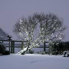 outdoor tree lights lights4fun co uk