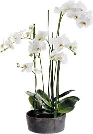 faux orchids faux phalaenopsis orchids with clay pot reviews joss