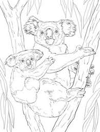 mother baby koala animal colouring pages baby