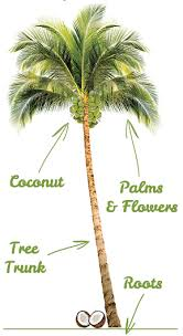 coconut tree help grow lanka
