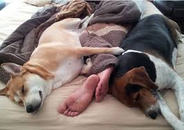 Sharing Bed Meme - 9 realities of sharing a bed with your dog barkpost