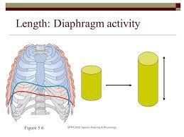 Anatomy And Physiology Of Speech Sppa 2050 Speech Anatomy U0026 Physiology Physics Of Breathing Key