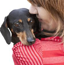 afghan hounds for adoption dog adoption search by breed size age and location