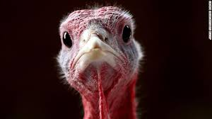 cnn on 9 thanksgiving facts we bet you don t https