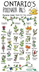 native plants natural areas notebook 26 best wildflowers images on pinterest flowers blossoms and