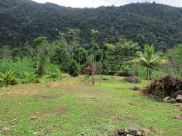 ridgeback farm house lots u0026amp jungle acreage