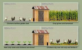 Victory Garden Layout Run And Coop Rotation Backyard Chickens