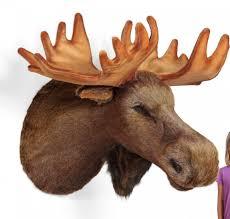 Moose Head Decor Accessories Inspiring Dark Brown Furry Wall Mounted Moose Head