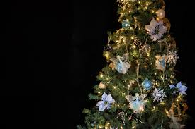 christmas tree flower lights free images branch flower pine decor christmas tree christmas