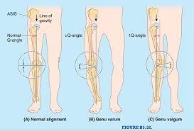 Anatomy Of The Knee 012b Knee Joint Anatomy Flashcards Memorang