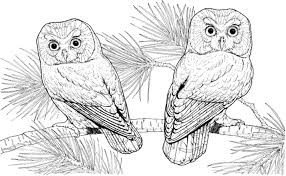 owl coloring pages kids for toddlers color animal printable free