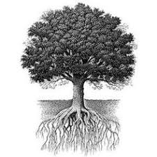tree roots tattoo google search resim pinterest tree roots