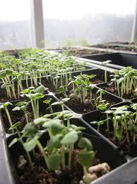 Indoor Plant Light by Indoor Light Surprising Plant Grow Lights For Indoor Gardening