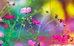 Cute Flower Wallpapers - wallpaper beautiful flowers wallpaper free download