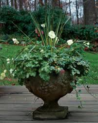 Potted Plant Ideas For Patio by Four Container Planting Ideas For Autumn Fine Gardening