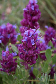 new mexico native plants 4649 best plants i love or want to try growing images on pinterest