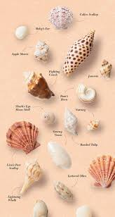Where To Buy Seashells Where Do Sea Shells Come From Shell Beach And Child