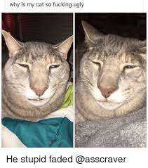 Stupid Cat Meme - why is my cat so fucking ugly he stupid faded fucking meme on me me