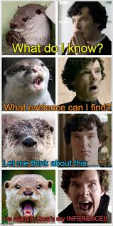 Find Me Memes - sherlock otters who look like benedict cumberbatch memes imgflip