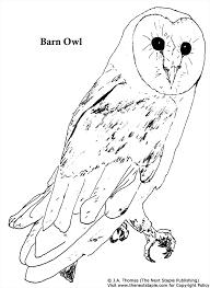 Art School Owl Meme - realistic barn owl drawing at getdrawings com free for personal