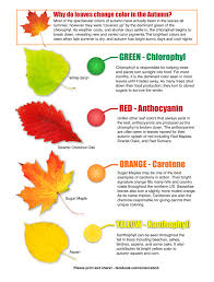 why do leaves change color in the autumn from science bob u0027s blog