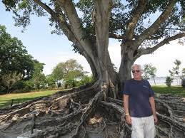 one big special tree and a picture of edison ford