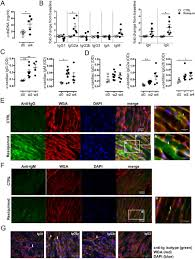 systemic autoimmunity induced by the tlr7 8 agonist resiquimod