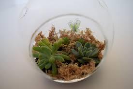 how to make your own mini terrarium l diy terrarium