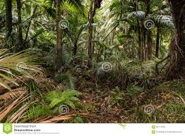 tropical rainforest native plants palm trees growing in tropical rainforest stock photo image