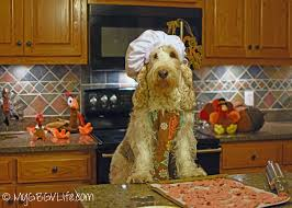 chef s all in one thanksgiving recipe for dogs my gbgv