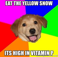 High Dog Meme - eat the yellow snow its high in vitamin p advice dog meme